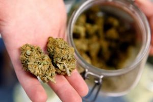 Elegant Ways To Legally Acquire Marijuana By Medical Marijuana Card